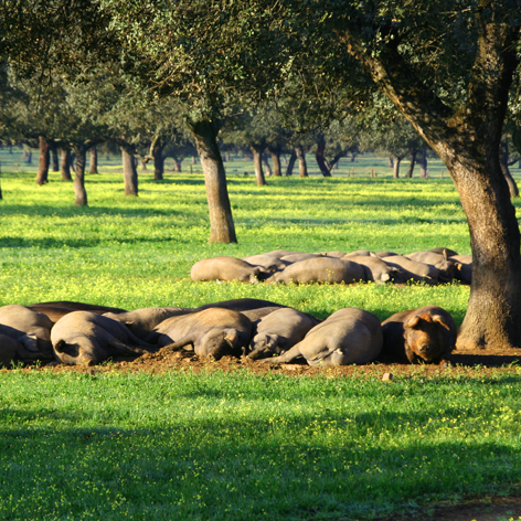 Finca Cantillana ( País de Quercus )